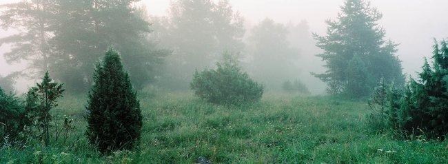 Luopioinen P42 A1, 08.07.2001 © Tapio Heikkilä/ Visuaalinen maisemaseuranta/ MTT:n arkisto