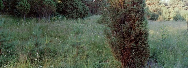 Orivesi P32 A1, 07.07.2001 © Tapio Heikkilä/ Visuaalinen maisemaseuranta/ MTT:n arkisto
