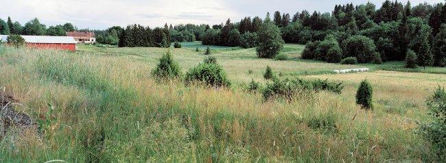 Sahalahti P28 A2, 07.07.2001 © Tapio Heikkilä/ Visuaalinen maisemaseuranta/ MTT:n arkisto