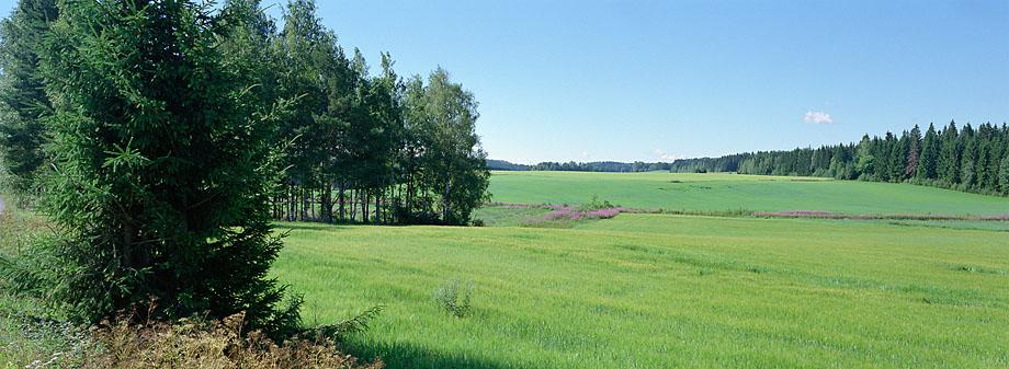 Hollola P4 S, 19.07.2010 © Oiva Hakala/ Visuaalinen maisemaseuranta/ MTT:n arkisto