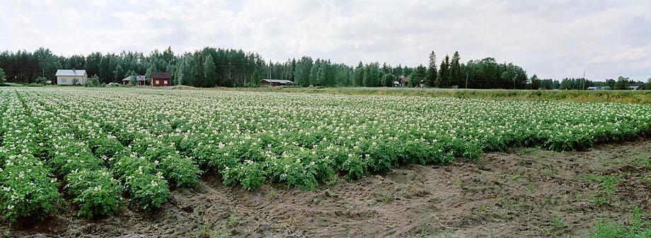 Kuortane P4 W, 23.07.2001 © Oiva Hakala/ Visuaalinen maisemanseuranta/ MTT:n arkisto