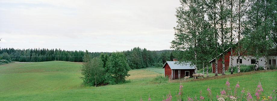 Ilomantsi P5 N, 26.07.2000 © Oiva Hakala/ Visuaalinen maisemaseuranta/ MTT:n arkisto