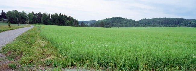 Halikko P4 S, 15.07.2010 © Oiva Hakala/ Visuaalinen maisemaseuranta/ MTT:n arkisto